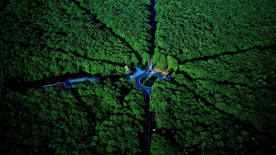 Carrefour de la forêt de Tronçais à Saint-Bonnet Tronçais (Crédit photo LECHENET Franck / CDT 03)