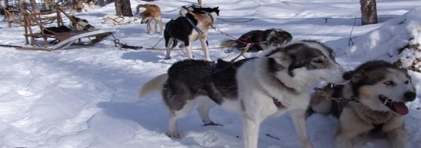 Course en traineaux au coeur de la steppe canadienne (photo DR)