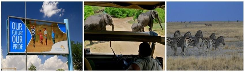 Encore préservé d'un tourisme de masse, le Botswana a conservé un peu du charme des safaris d'antan. Du parc de Chobe, au Kalahari en passant par le delta de l'Okavango, une large partie du pays vibre au rythme d'une vie sauvage quasi intacte.(Crédit photos Patrick Cros)
