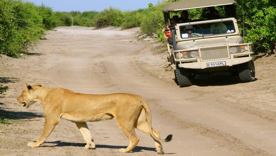 Xigera et Mambo Camps. On ne croise ici aucun 4X4 au cours des safaris et la nature se révèle dans son état originel, sans crainte de l'homme. On s'approche à quelques dizaines de mètres seulement des animaux (Crédit Photo Patrick Cros)