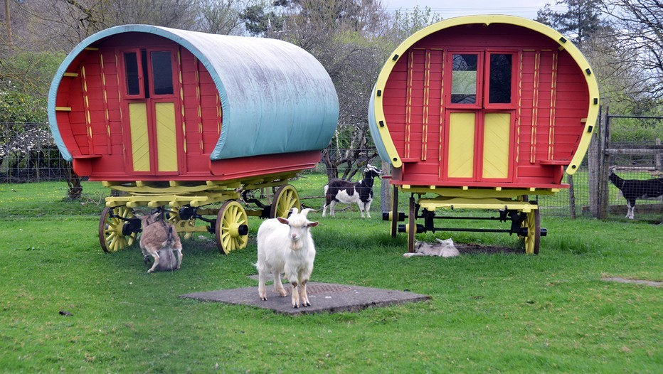 D'étonnantes roulottes situées à Bunratty en Irlande (Crédit photo David Raynal)