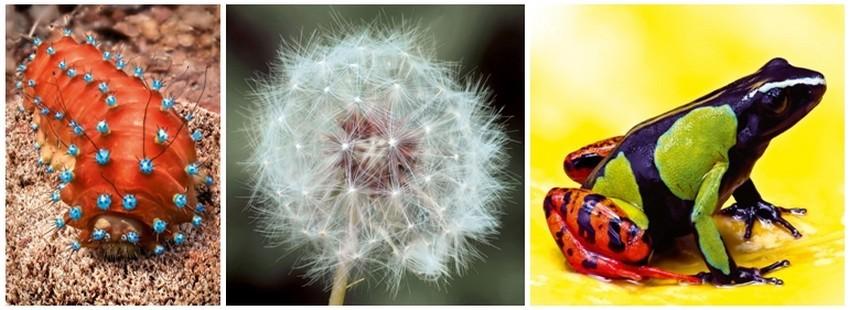 Photos extraites de l'album Hyper Nature du photographe et naturaliste Philippe Martin. De gauche à droite : Chenille du Grand Paon de nuit ; Fleur de Pissenlit ; Un Batracien aux couleurs vives.