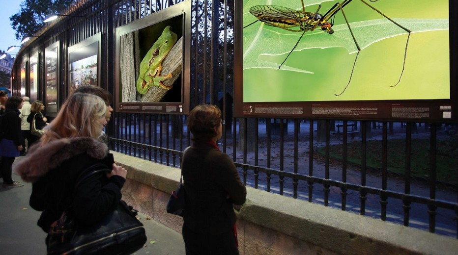 Exposition sur les grilles du jardin du Luxembourg  des photos Hyper Nature du naturaliste et photographe Philippe Martin : Hyper Nature. Jusqu'au18 Janvier 2015.(Crédit photo DR)