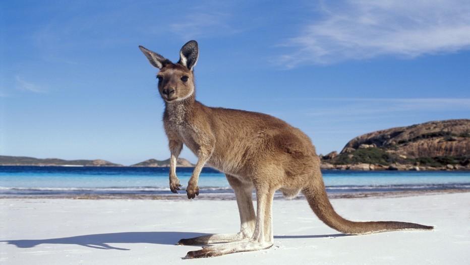 En 2015, la 26e édition du FIG aura pour thème «Les Territoires de l'Imaginaire, Utopie, Représentation et Prospective » et mettra le cap résolument au sud vers l'Australie (Crédit photo Rougezorua)