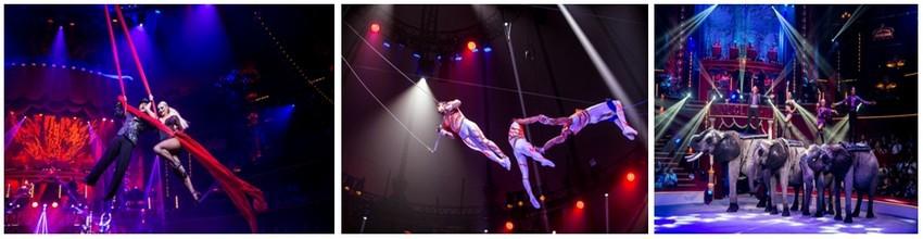 """En octobre 2015, pour la première fois depuis 25 ans, le Cirque Bouglione repart sur les routes de France. Caravanes, chevaux, tigres, éléphants, camions, clowns, acrobates dans une ferveur et un dynamisme jamais égalés sont prêts pour cette nouvelle aventure.( Crédit photos - spectacle """"Géant"""" Cirque Bouglione - Dominique Secher )"""