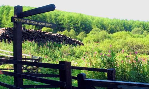 Découvrir beauté du West Highland Way, le terrain de jeu préféré des randonneurs. (Crédit photo Rannoch Moor)