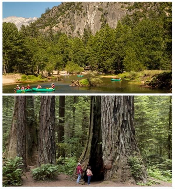 Photo du haut : Yosemite Descente en canoé de la rivière Merced  © DR ; Photo du bas : Les séquoias géants de Yosemite  © DR