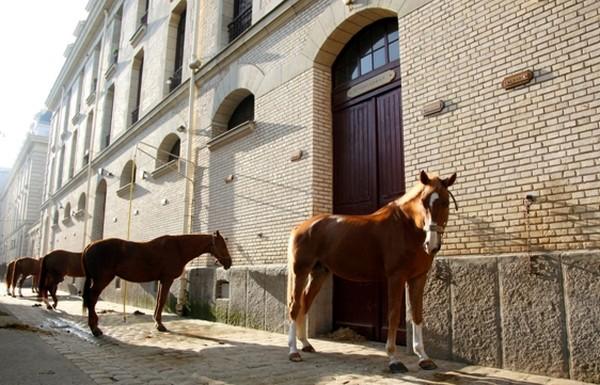 Dans la Grande Ecurie de la Garde Républicaine et dans celle de l'Etat-major, il est possible d'approcher les superbes chevaux. © Garde Républicaine.