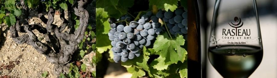Ici, les vins sont généreux et charnus, charpentés mais subtils, fruités et complexes, et sont (c'est le syndicat qui le dit) à l'image des hommes et des femmes qui les font «  intenses et sincères avec richesse et finesse ». ©  Richard Bayon