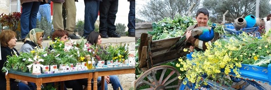 Tous les habitants de la ville turque d'Alaçati  présentent et mettent en valeur les différentes variétés d'herbes et plantes locales; moutarde blanche, rocambole, chicorée, chardon d'Espagne...l © 2013 explorealacati. All Rights Reserved