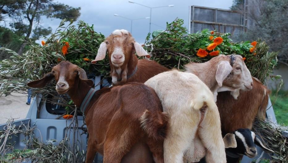 Alaçati, célèbre l'arrivée du printemps en accueillant du 7 au 10 avril  la nouvelle édition du festival des herbes. © 2013 explorealacati. All Rights Reserved