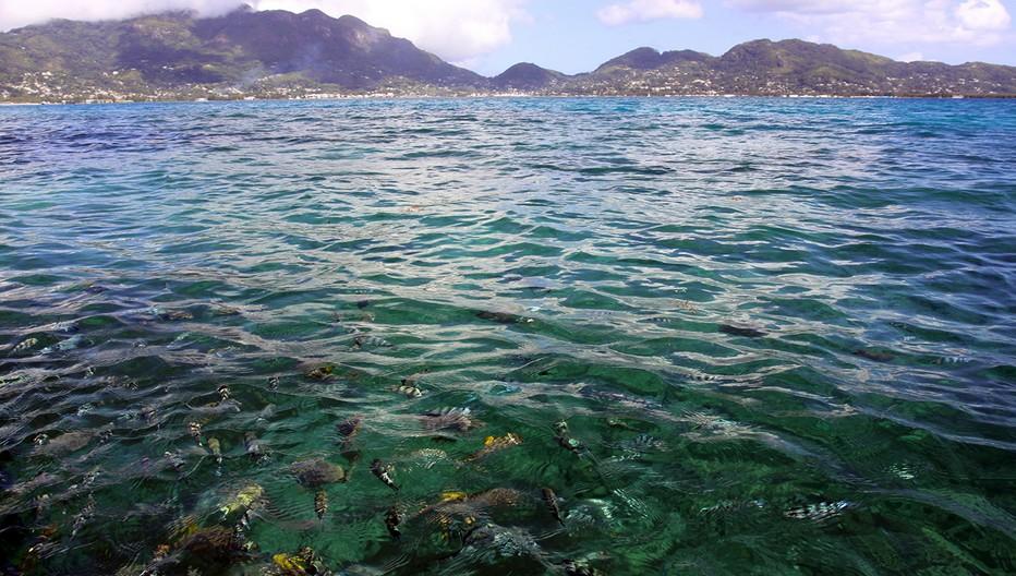 Les eaux calmes et et poissonneuses de l'île de Mahé qui est la principale île de l'archipel des Seychelles, dans l'océan Indien. Elle abrite la capitale, Victoria.  © David Raynal