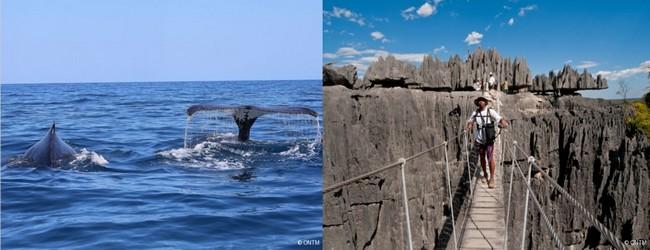 De gauche à droite : Baleines au large du Cap Ste Marie  © ONTM; Tsingy de Bemarana © ONTM