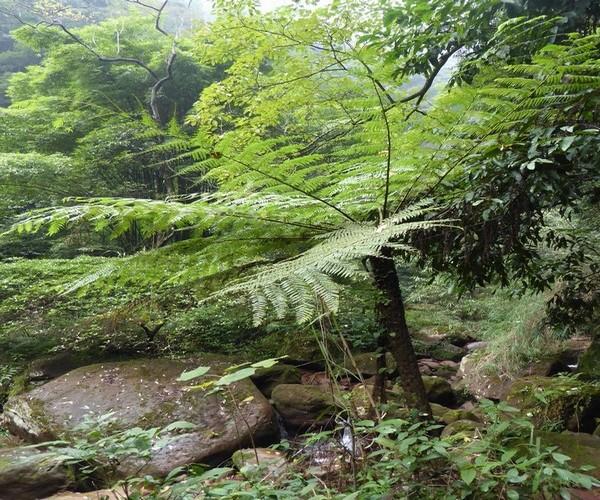 Bambous géants et fougères arborescentes datant du Jurassique.  © Catherine Gary