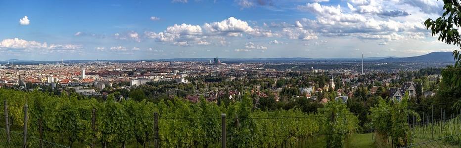 Vienne est une région viticole à part entière, avec quelque 700 hectares de vignes (raisins blancs à environ 80). © Lindigomag/Pixabay