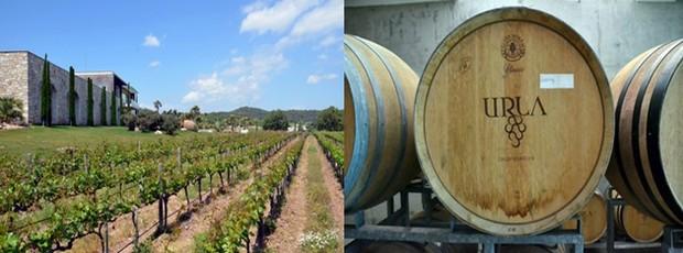 Des itinéraires découverte sont ainsi proposés aux voyageurs, pour rencontrer les producteurs de vin de la région et déguster les cépages autochtones, Bornova Misketi ou encore Urla Karasi. Crédit photo David Raynal
