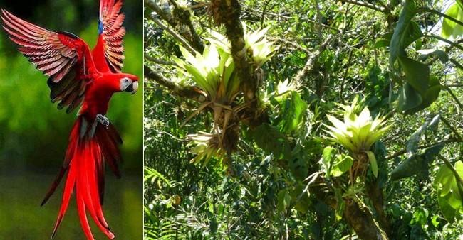 Terre tropicale bercée par deux océans, le Panama est riche de 10 000 espèces de plantes, et d'un millier d'oiseaux colorés © Lindigomag/Pixabay © C.Gary