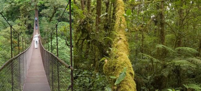 Départ du village, de Boquete, à 1600 mètres d'altitude, pour 3 kilomètres aériens de glisse le long de 12 cables perchés à 60 mètres au-dessus de la forêt dense et brumeuse. © C.Gary