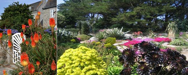 Le climat très doux de cette île à 15mn en bateau du port permet l'épanouissement d'étonnantes plantes exotiques comme au jardin Georges Delaselle  (Copyright C.Gary et DR)