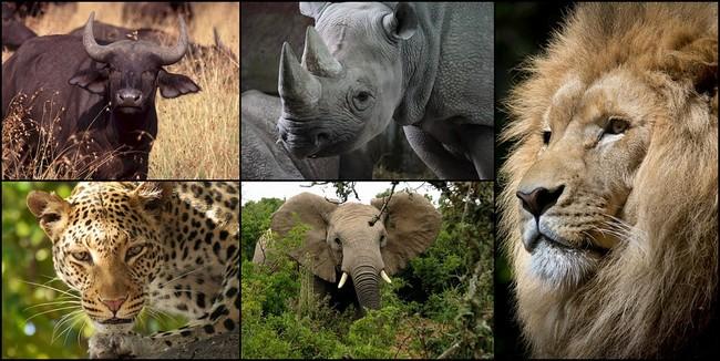 L'Afrique du Sud  est aussi connue pour être le foyer des « Big Five » (cinq grands) : éléphant, lion, léopard, rhinocéros et buffle. Copyright Lindigomag/Pixabay