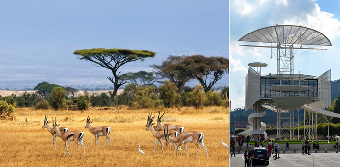 Les gazelles caracolent en toute liberté dans le magnifique parc Kruger en Afrique du Sud; Tour de la Liberté à Saint-Dié-des-Vosges. Copyright Lindigomag/Pixabay et David Raynal