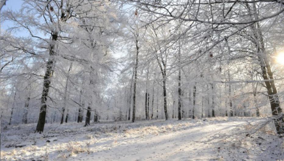 La forêt de Saint-Hubert en hiver. Crédit photo Pierre Pauquay