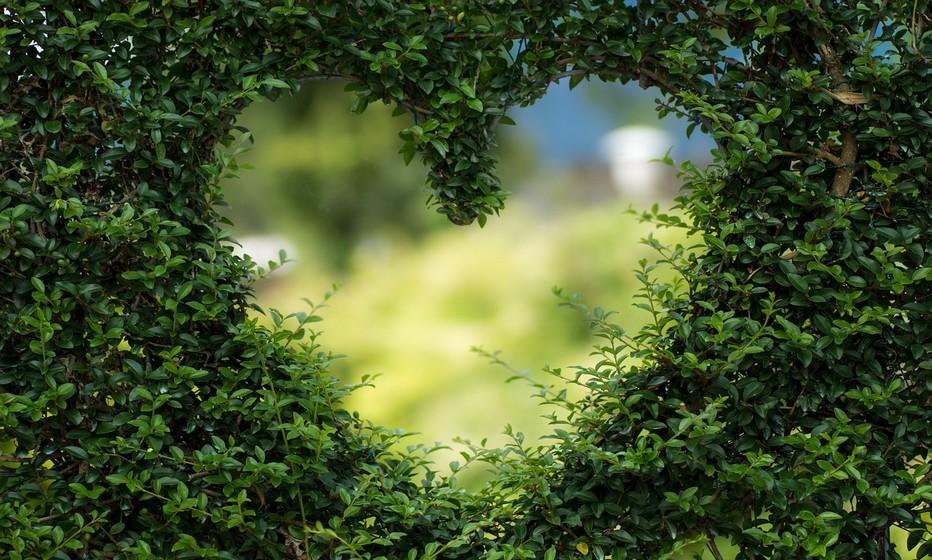 Le 14 février jour de la Saint-Valentin ,un rituel à ne pas manquer.  (Copyright lindigomag/Pixabay)