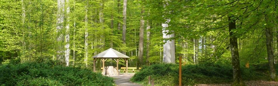 La forêt de Berce Vallée du Loir. Crédit photo D.R.