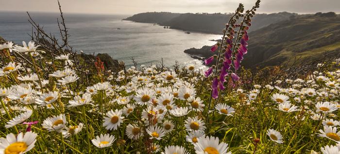 La côte Sud est le lieu des randonnées sauvages, des falaises et des paysages ruraux. Copyright visitguernesey