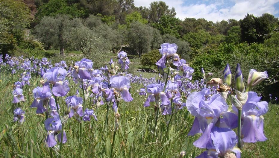 Sur les hauteurs de Grasse se cultivent toutes les fleurs et plantes utilisées pour la fabrication des huiles essentielles. Copyright lindigomag/Pixabay