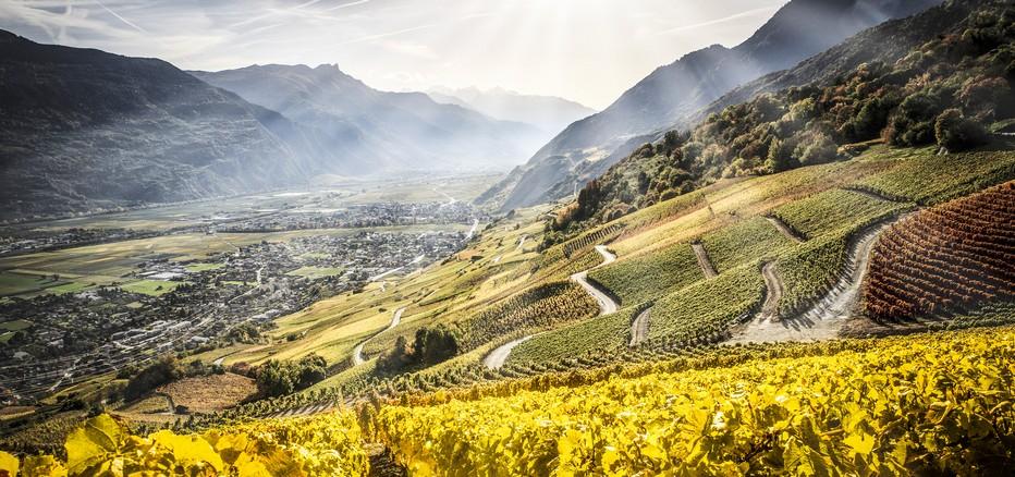 Le Valais est réputé pour être la plus grande région viticole de Suisse avec ses 5000 hectares de vignes, l© OT Sierre
