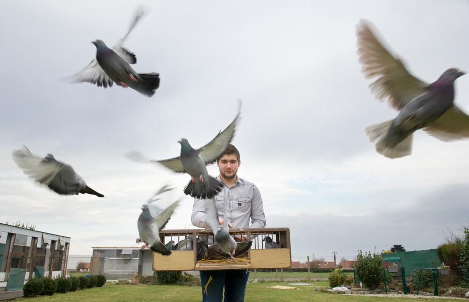 Colombophilie Lâcher de colombes entre le Louvre-Lens et le Louvre à Paris; @ Euralens Jm.André