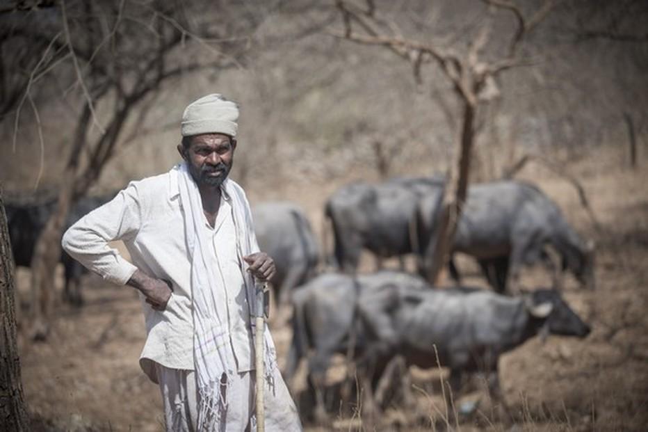 Parc national de Gir. Gardien de troupeau          ©Fabrice Dimier