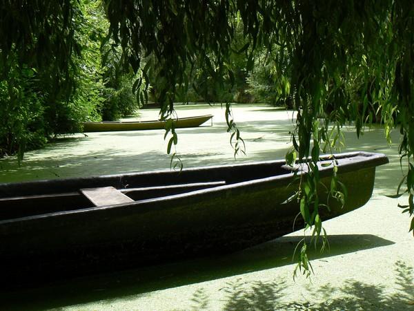 "La ""Venise"" verte la bien-nommée - @ Lindigomag/Pixabay"