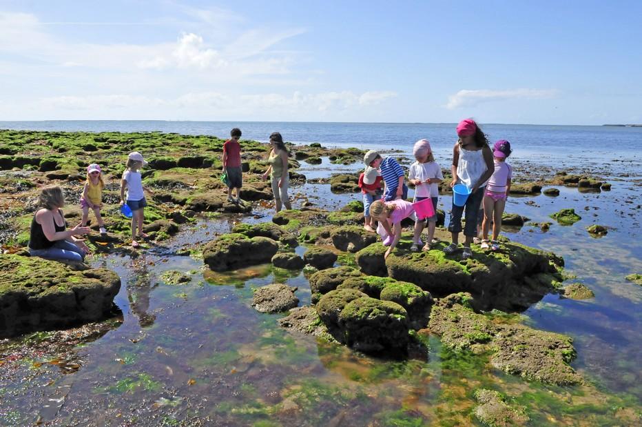 Cap France Noirmoutier : Une multitude d'activités pour petits et grands. Pêche à pied dans les rochers Club enfants_©4 Vents