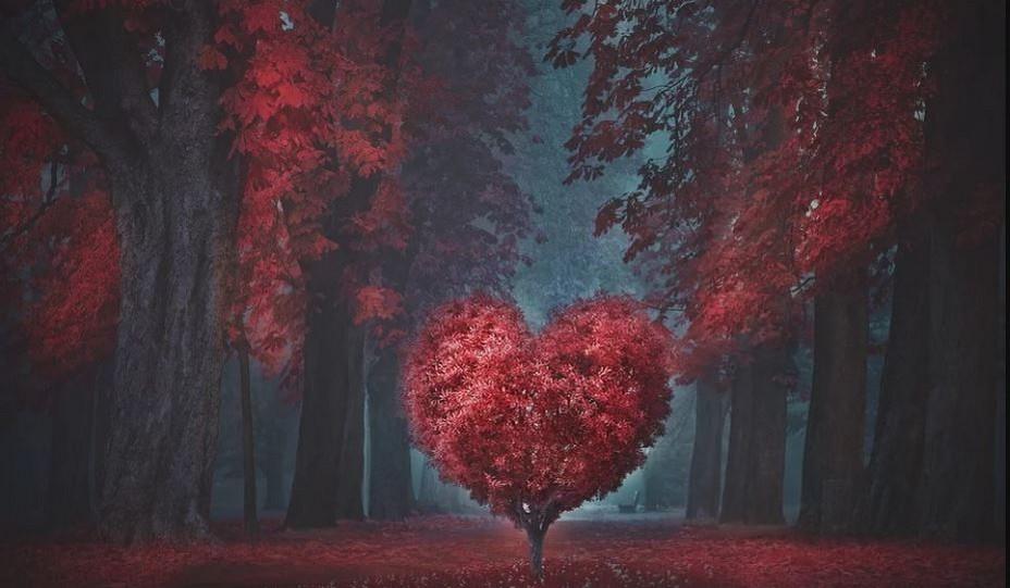 A la Saint-Valentin on n'oublie pas ami(e) ou conjoint ! @ lLindigomag/Pixabay