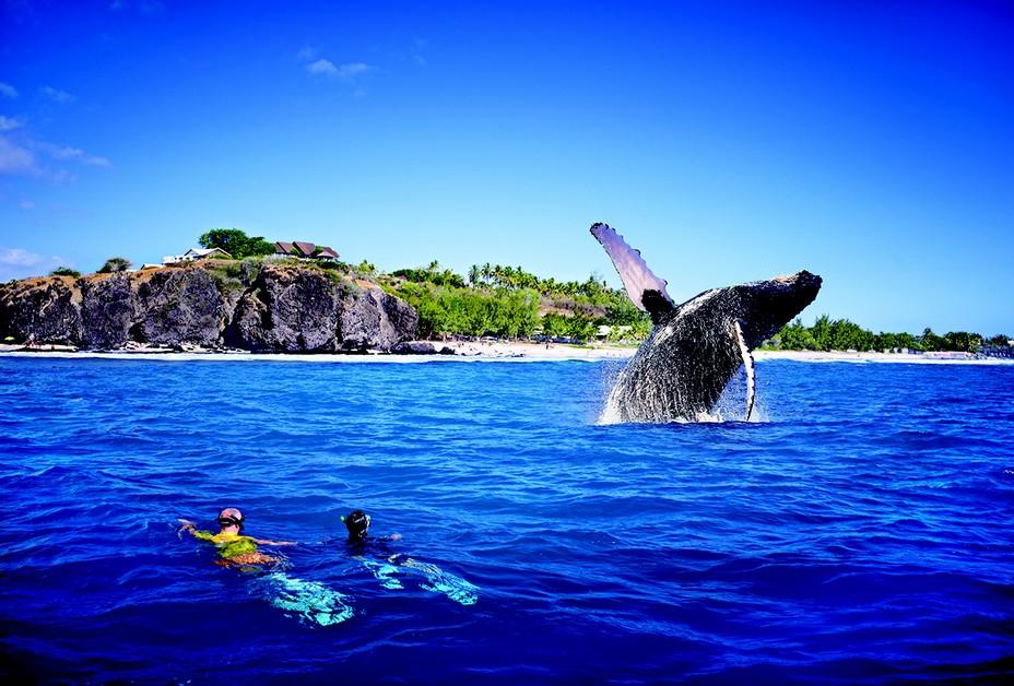 Retour de la faune marine tortues et baleines à bosse dans les eaux tièdes de La Réunion. @ J.Akhoun - Studio Lumiere.