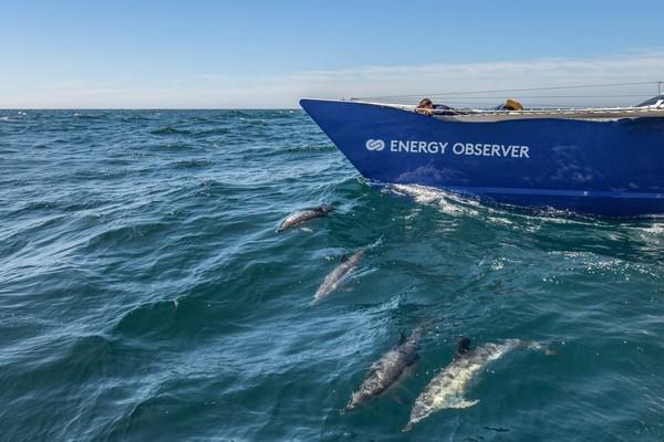 Energy Observer au milieu de l'Atlantique et parmi les dauphins  @amelie conty