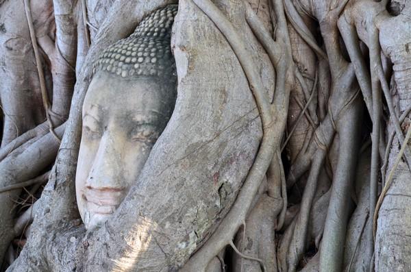 Une étonnante tête de Bouddha enserrée dans les racines noueuses d'un banian au Wat Mahathat. @ David Raynal
