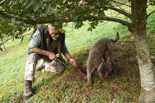 Cavage de la truffe avec le maître et son chien @ C.Gary