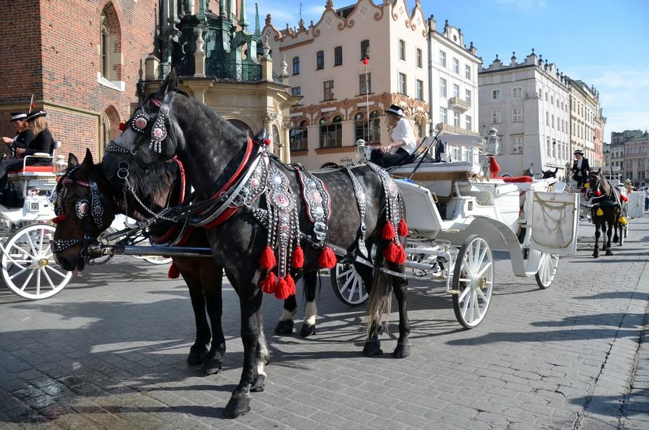 Balade en calèche pour visiter cette belle Cracovie. @ David Raynal
