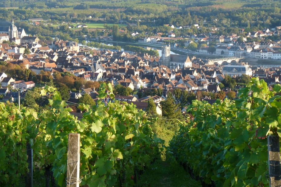 Vue des vignes de Côte Saint-Jean @ Tourisme Joigny Jovinien