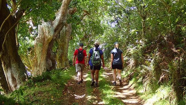 Les randonnées les plus simples se trouvent dans le centre luxuriant de Sainte-Hélène @ OT Sainte-Hélène.