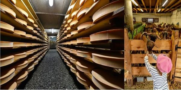 Cave d'affinage d'Abondance AOP à la ferme Girard ©LeMont   et  Chèvrerie des Thoules à La Chapelle d'Abondance ©Cyril Entzmann
