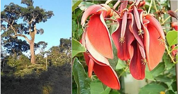 La végétation et la flore dans le  le parc national Iguazù. @ Pixabay