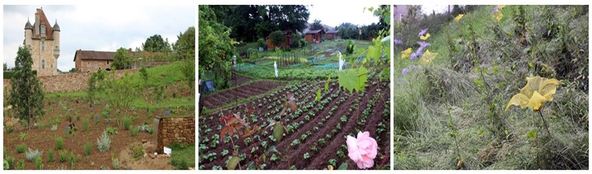 Acquise progressivement par la ville de Limoges, la vallée de l'Auzette, est toute entière aménagée en une succession de trois parcs. Avec leurs petites parcelles soigneusement cultivées, les jardins familiaux, font partie intégrante du paysage de Limoges. (Crédit photo David Raynal)
