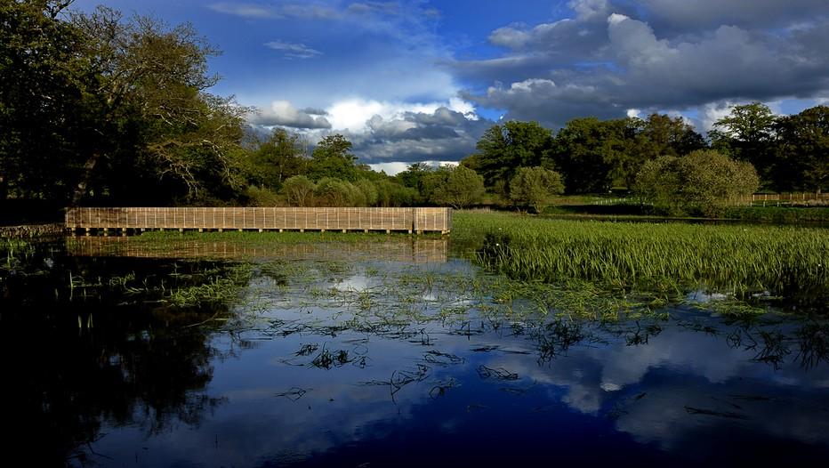 """Le plan d'eau de La Borie accueille en été une colonie de grenouilles """"très sonore"""" (Cédit photo JMPéricat)."""