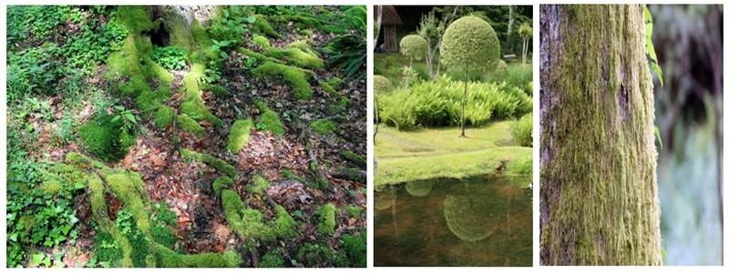 Thérèse et Gérard Thibault-Lemeignan vous accueillent dans leur jardin de Val Maubrune dans la Creuse. (Crédit photo David Raynal)