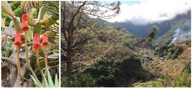 De gauche à droite : Jardin botanique de Funchal; Même en hiver la nature à Madère est luxuriante (Crédit photos André Degon)