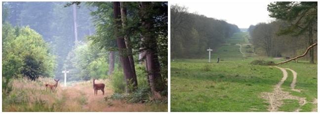De gauche à droite : la forêt domaniale de Compiègne avant l' abattage des arbres; La magnifique avenue des Beaux Monts telle que l'a découverte l'impératrice Marie-Louise d'Autriche  et telle qu'elle est aujourd'hui. On aperçoit très au lointain la façade du château (Crédit photo DR)